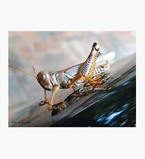 The Colors of A Grasshopper Photographic Print