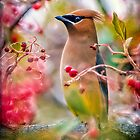 Cedar Waxwing... by Tracie Louise