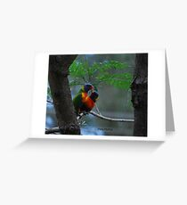 Rainbow Lorikeets - Adult & Baby Greeting Card