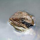 Eastern Water Dragon by Sarah Jennings