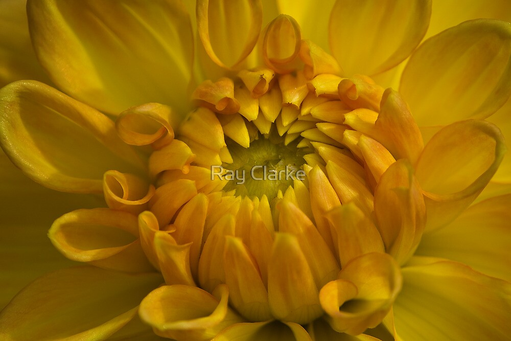 All Yellow by Ray Clarke