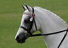 Portrait Of A Show Pony by Jenny Brice