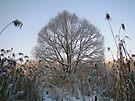 Another Winter Day by Mojca Savicki