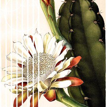 Vintage Botanical Art - Cactus N ° 1 by EMJAYHeiss