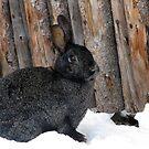 winter bunny by sue shaw
