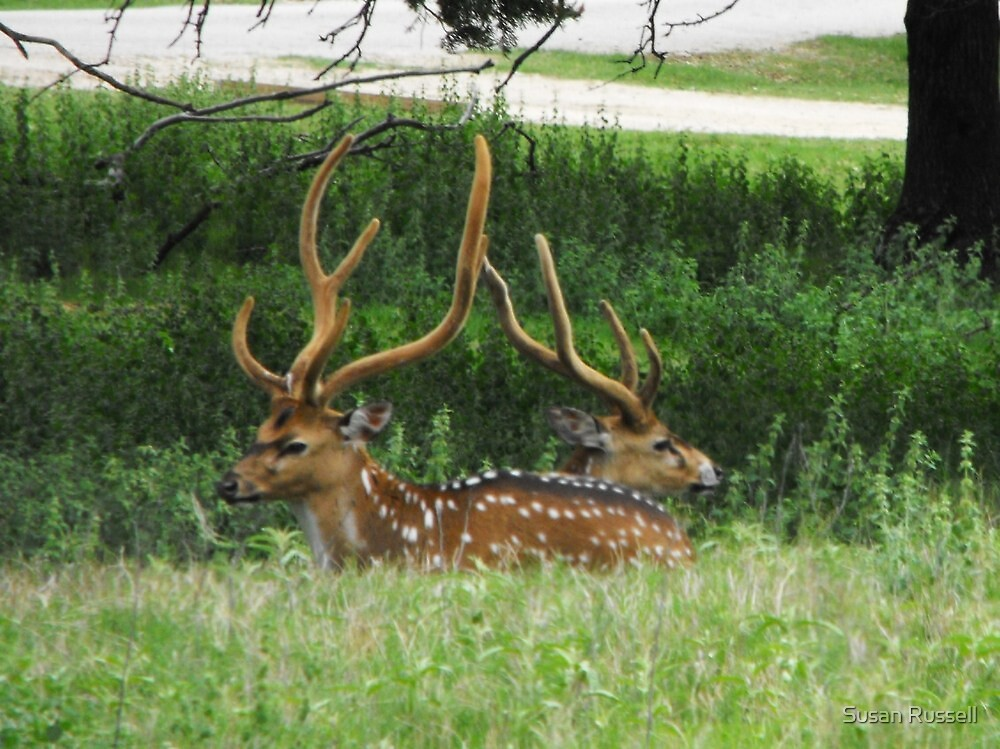 Two Bucks by Susan Russell