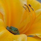 Tree frog in daylily by JMcCallum