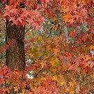 Fall in Texas by Janice Crayton