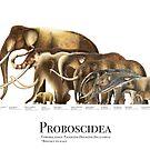 Proboscidea by Liam Elward