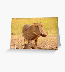 Warthog - Uganda Greeting Card