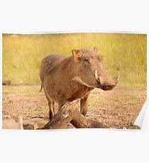 Warthog - Uganda Poster