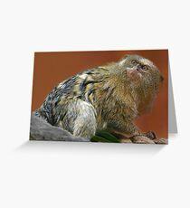 Marmoset Greeting Card