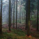 forest by dagmar luhring