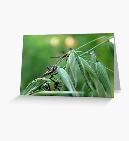 Assassin Bug Nymphs on Oats Greeting Card