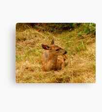 Little one still with spots! Canvas Print