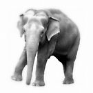 Elephant Ready by Deanna Roberts Think in Pictures