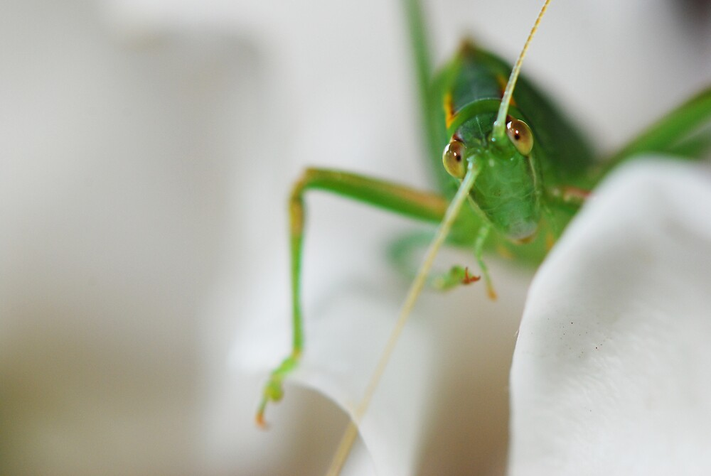 bug eyed by Tamara Cornell