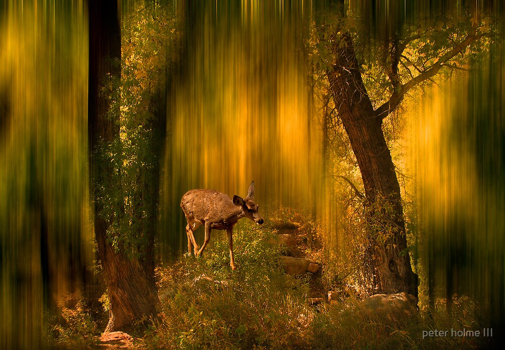 427 by peter holme III