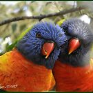 Australian Rainbow Lorikeets by Louise Page