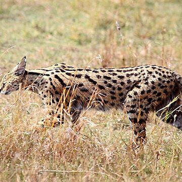 Serval Cat, Female, Serengeti, Tanzania  by Carole-Anne