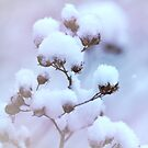 The Winter's Snowballs by Sherry Hallemeier