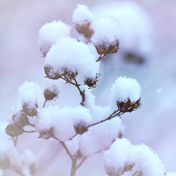 The Winter's Snowballs by spops