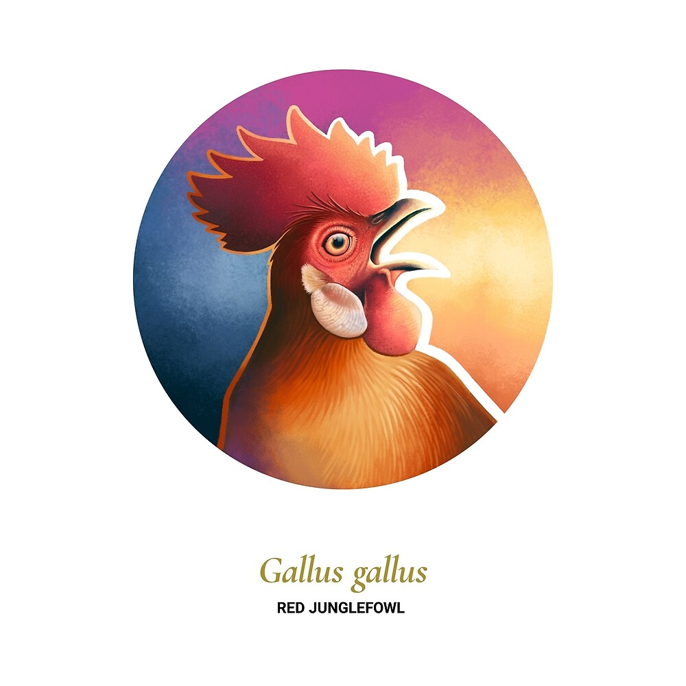 The Circles of Life: Red Junglefowl by Franz Anthony
