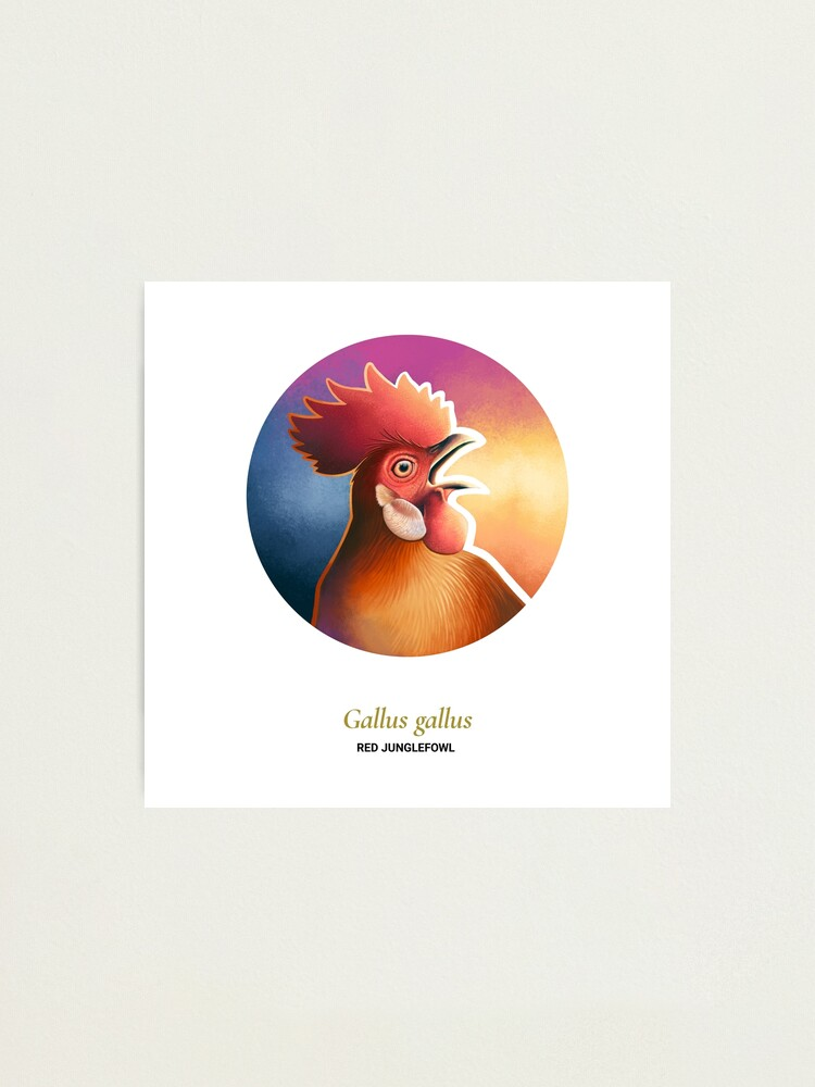 Alternate view of The Circles of Life: Red Junglefowl Photographic Print