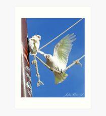 Anyone for a swing? Art Print