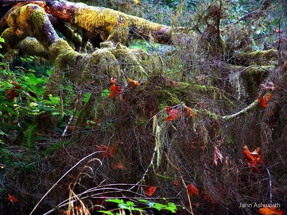 The Floor of a Rain Forest by Jann Ashworth