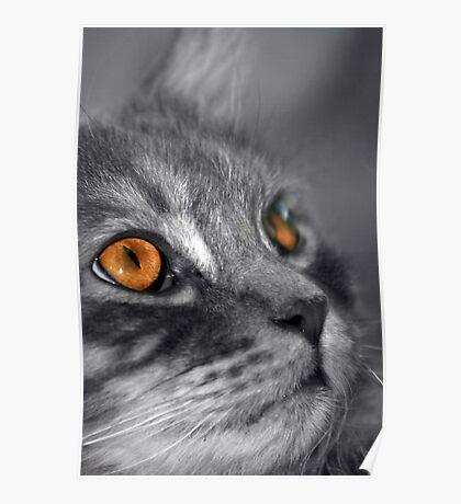 Orange Poster