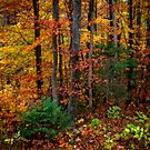 Autumn in Bavaria by Bevlea Ross