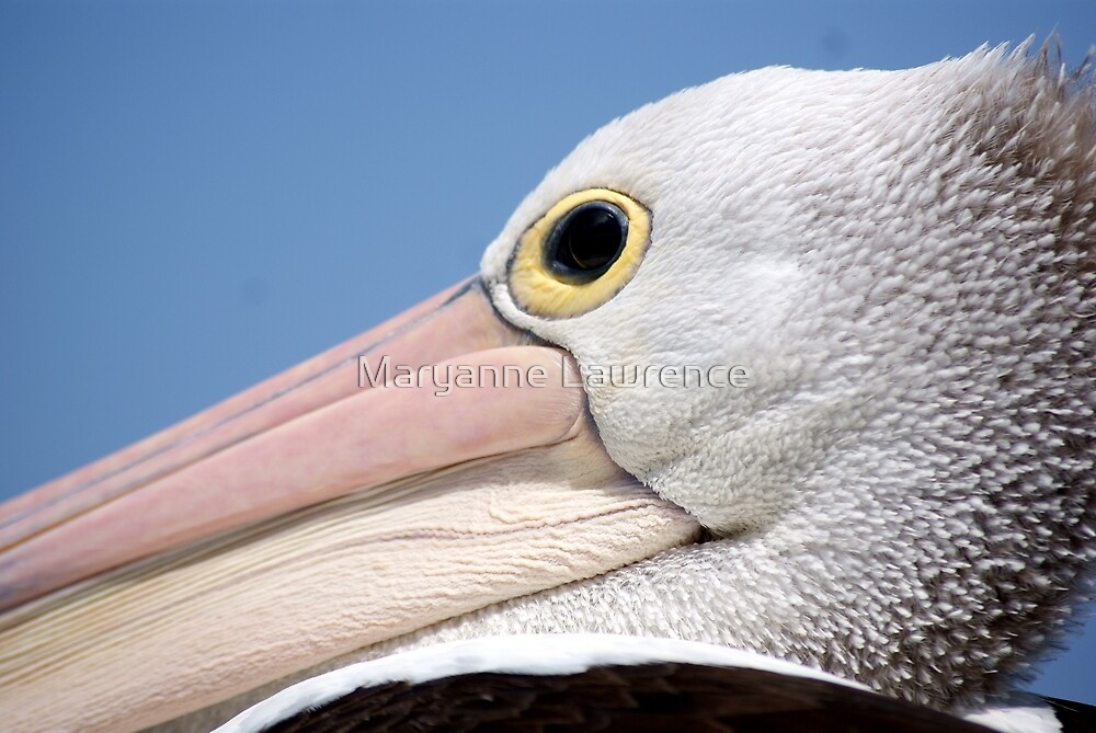 Up close by Maryanne Lawrence