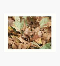 Botanic Nature Art Print
