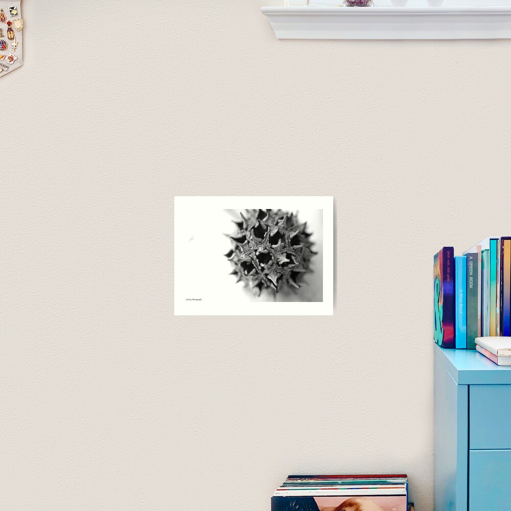 Sweet Gum Ball Art Print