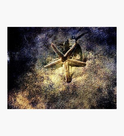 Sea Star Photographic Print
