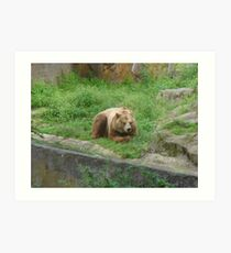"a happy bear in"" Bearlin"" Art Print"