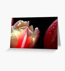 Tulips Macro. Greeting Card