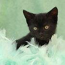 black kitten in green feathers by sarahnewton