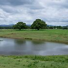 Taree West Farmland 7530 by kevin Chippindall