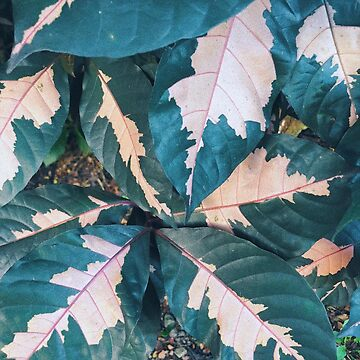 Pink and Green Leafy Plant by AlexandraStr