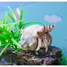 Crab on a Rock by David Wilson