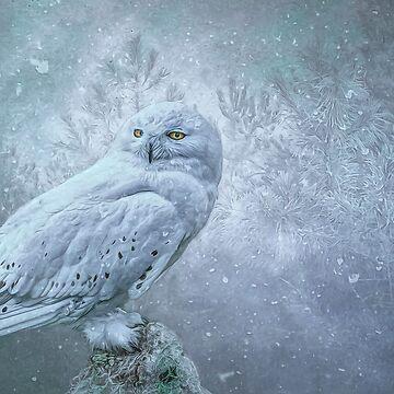 Snowy Owl in winter by Tarrby