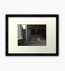 Oscar (Trailer Park America Series) Framed Print