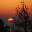 Sunrise Halfway by shane22