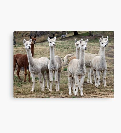 Odd One Out Canvas Print