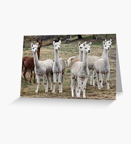 Odd One Out Greeting Card