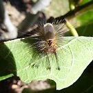 Caterpillar  by Clare101