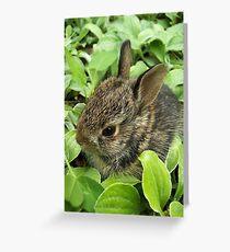Sweet Baby Rabbit Greeting Card