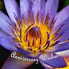 Blue Water Lily #2 - Hoi An, Vietnam  by Bev Pascoe